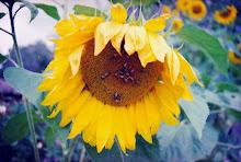 Flor de blop