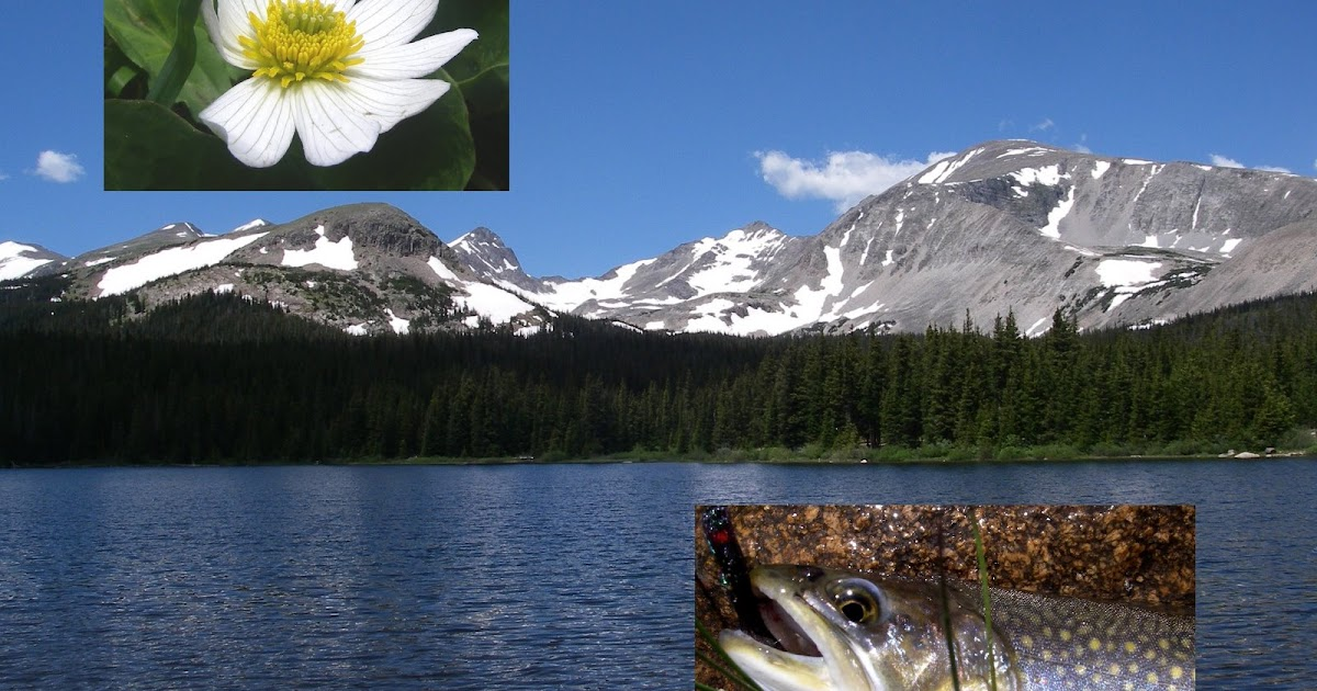 Colorado fly fishing reports brainard lake colorado for Fishing lakes in colorado