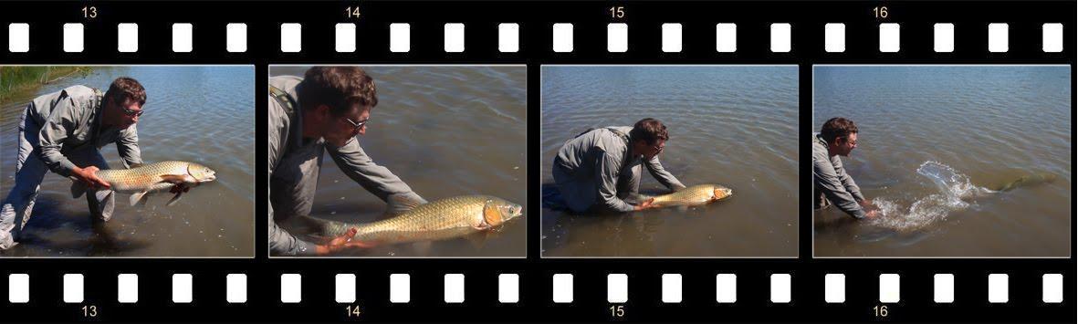 common carp fishing. Fly Fishing for Common Carp