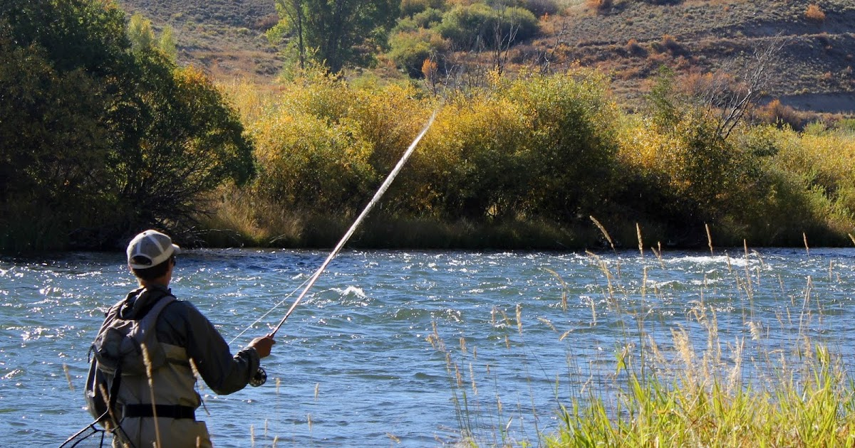 Colorado fly fishing reports americas cup fly fishing for Colorado fly fishing report