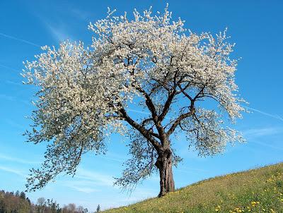 Nevruz Bayramı - Kalite Blog