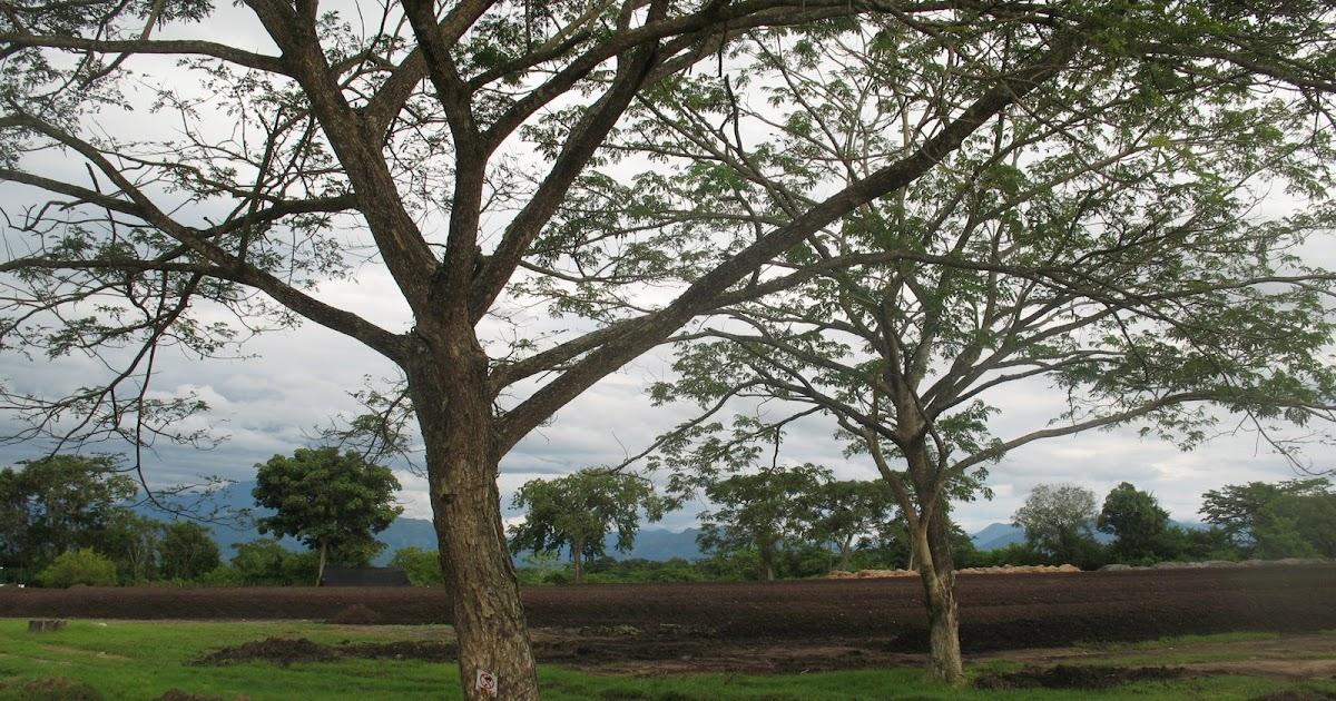 oui l 39 huile de palme certifi e biologique rspo next plantation tequendama aracataca colombie. Black Bedroom Furniture Sets. Home Design Ideas
