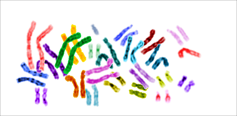 [ChromosomeKl]