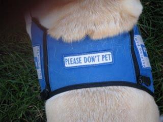[don't+pet]