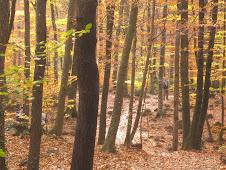 ... perdrem al bosc.