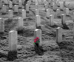 Arlington&#39;s Rose