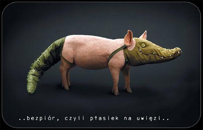 ..bezpiór, czyli ptasiek na uwięzi..