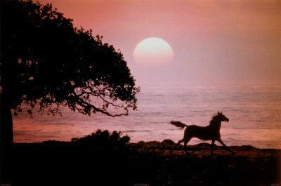 Όμορφες εικόνες... Hobune+ja+p%C3%A4ike