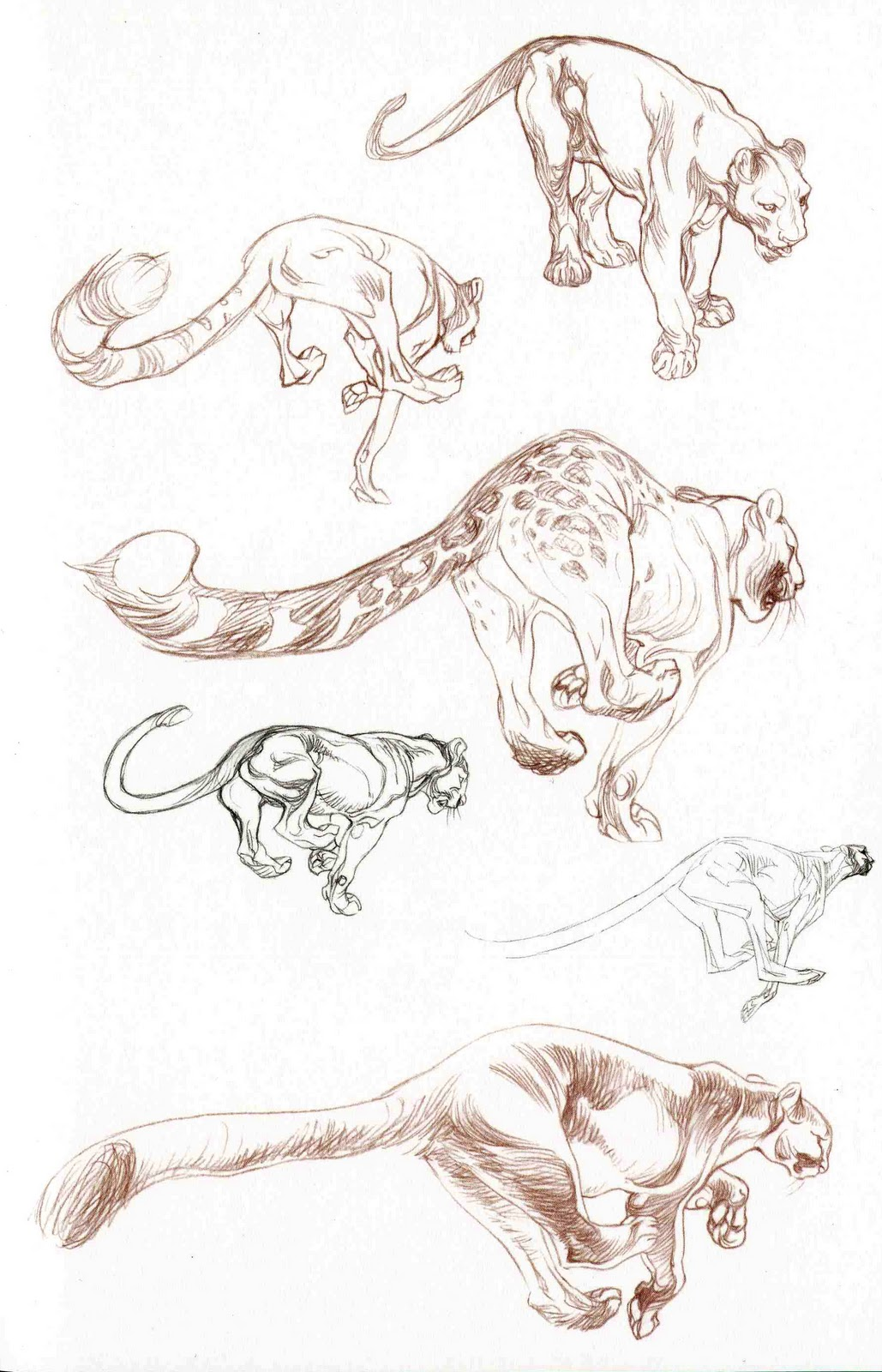 Character and Creature Design Notes: Claire Wendling\'s Cats