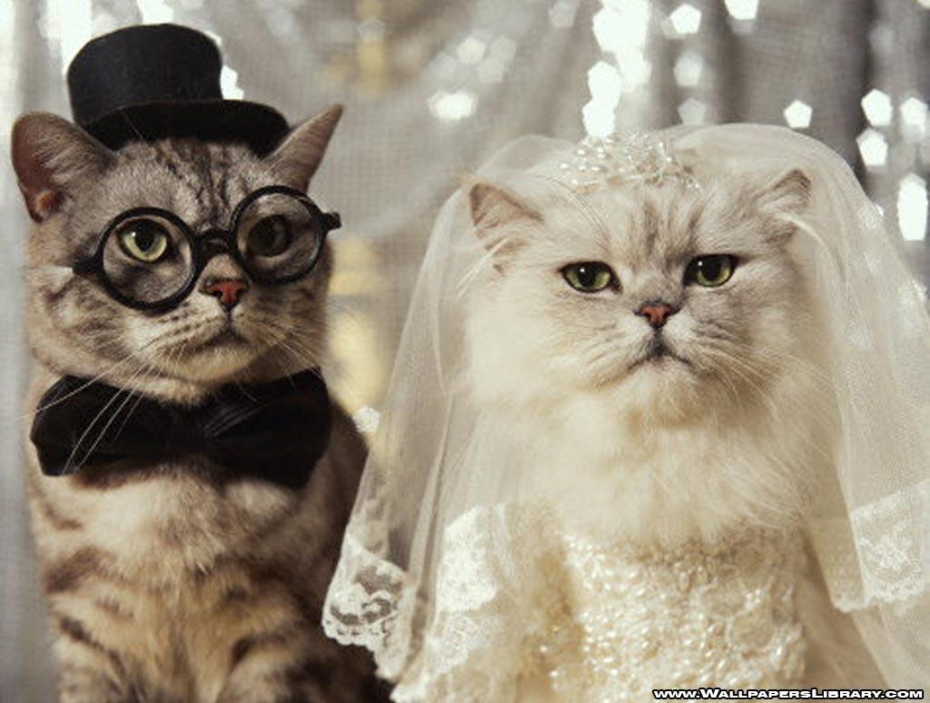 funny-cats-wedding-wallpaper.jpg