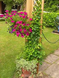 New pergola flowers