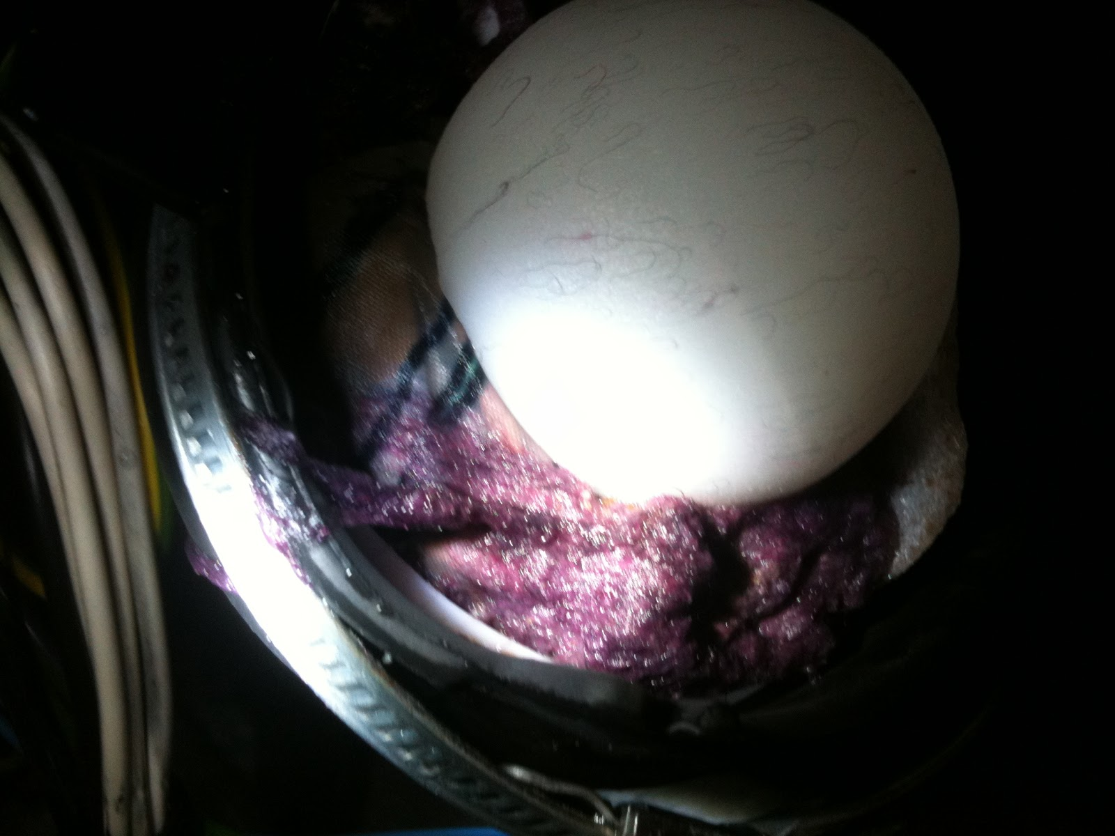 Mods bodges how to repair an hotpoint aquarius wd420or how to the sump inlet was so full of what looked like a doctor who monster 1970s tom baker era the ball float was pushed against the drum outlet and stopped fandeluxe Images