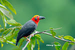 Photodocument 413 species of  wild Borneo Birds