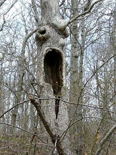 Trees Look Like Monster