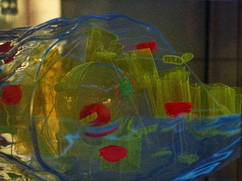 Células CJH: Maquetas de células animales