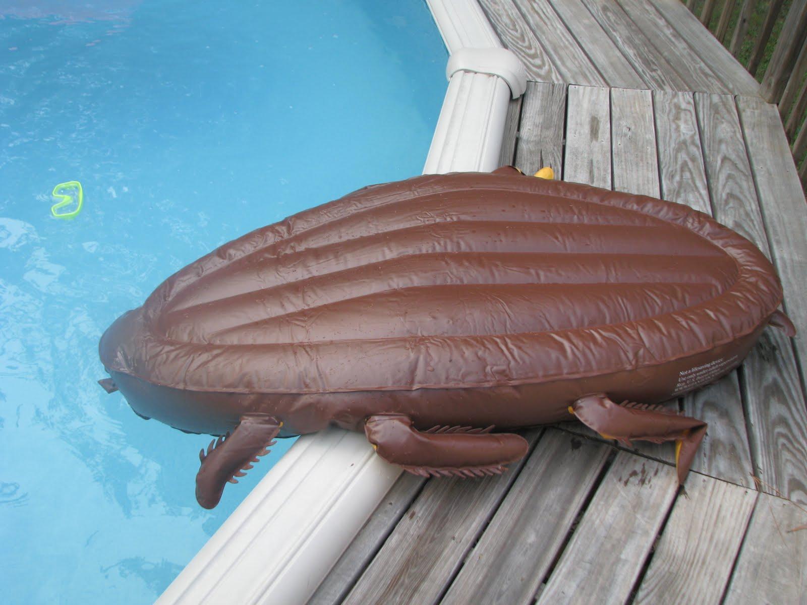 The Birdhouse Giant Roach