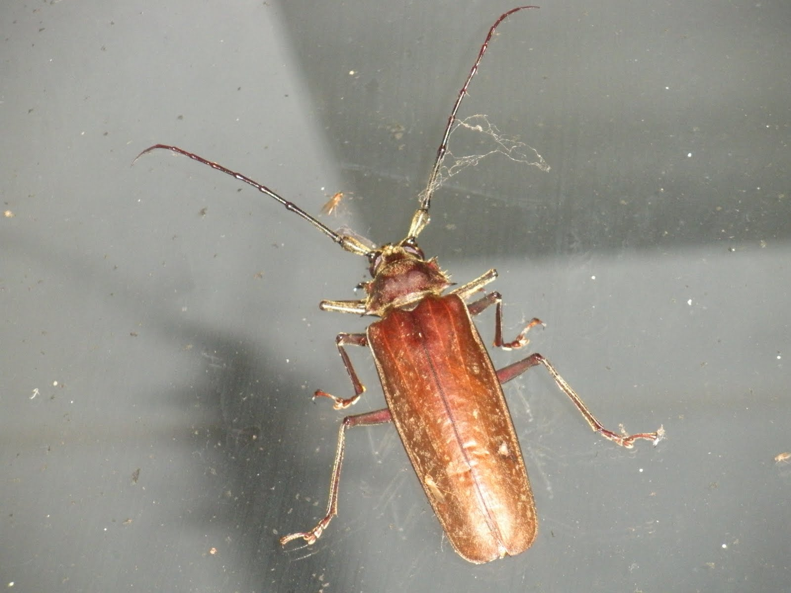 What are bugs that look like roaches?