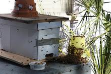 Starfruit Bees