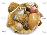Tipos de conchas