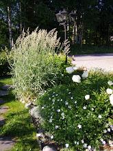 glimtar ur trädgården