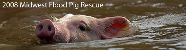 2008 Midwest Flood Pig Rescue