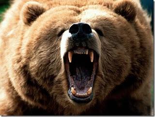 الدببه اكلات البشر ..... Grizzly_thumb