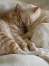 Brothers, Rusty and Sweet Pea ~~ They adore one another...