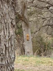 Nest Box 7