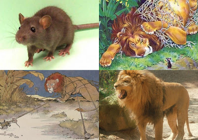 Parcours b i fables contes - Image le lion et le rat ...