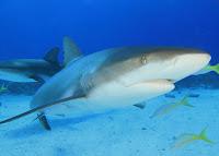 Requins de la finance