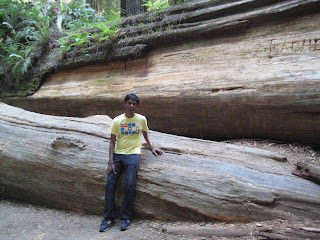 next to fallen giant @ redwoods national park