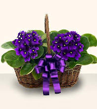 I Love African Violets