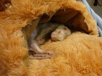 Hier sliep hij vaak in