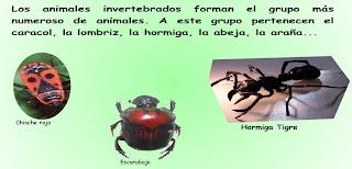 external image Invertebrados.bmp