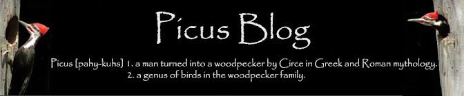 Picus Blog