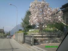 Aprilie - Gemona del Friuli