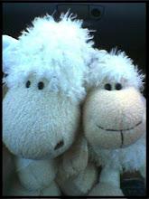 Sheepiies ♥
