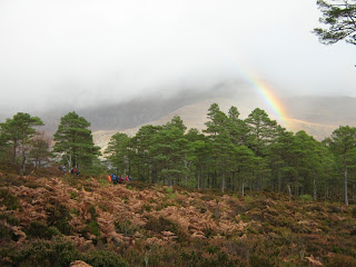 Pinewood with rainbow
