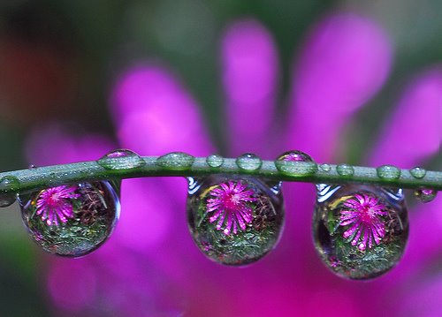 The Beautiful Colors of Life