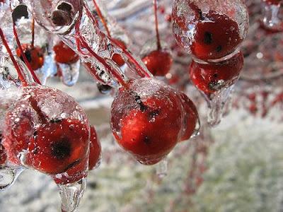 choke cherries The Forgotten Fruit
