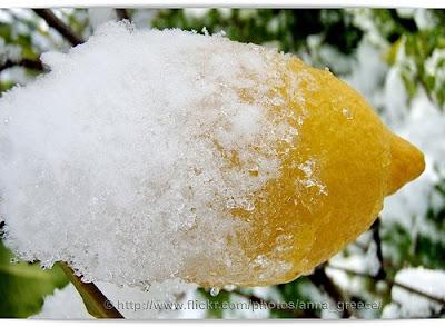 Lemon The Forgotten Fruit