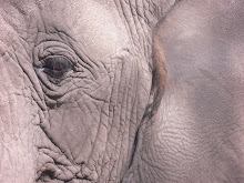 My up-close and personal time with a kind, thoughtful wounded elephant at a refuge camp