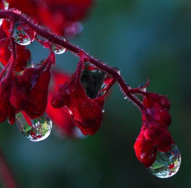 Raindrops Live Wallpaper: Beautiful Pictures Of Flowers And Raindrops