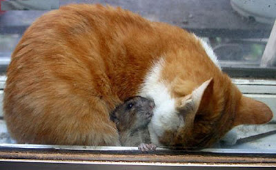 Funny Cat and Mouse Photos