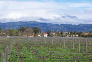 Sonoma Hills and Vineyards