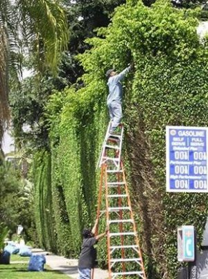 [080411-wll-ladders.jpg]