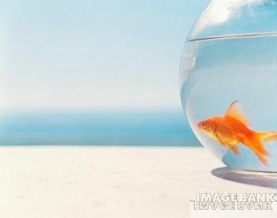 poisson qui regarde la mer Traitement des acouphènes par la sophrologie