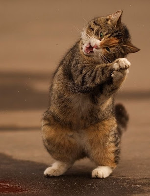 http://4.bp.blogspot.com/_osrVjnPbdEM/SrzIF4ha-vI/AAAAAAAAL7o/vbwsa73cHeA/s400/Cat_Dance_6.jpg