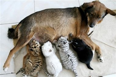 [adoption+Dog+2.jpg]