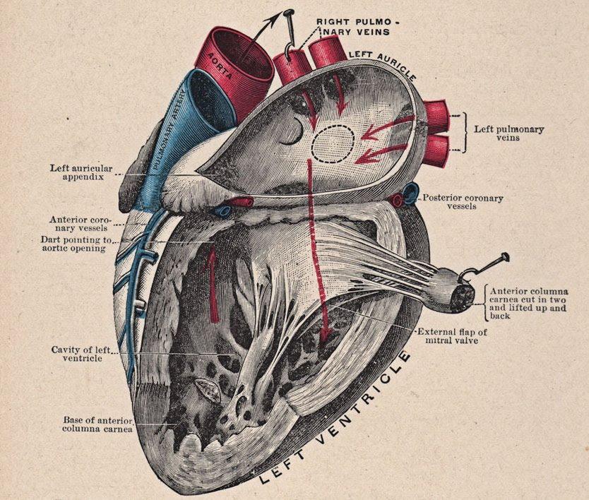 Cambio radical: A todos nos gusta ver corazones abiertos